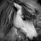 """Manadis"" - Icelandic Horse by Mitch  McFarlane"