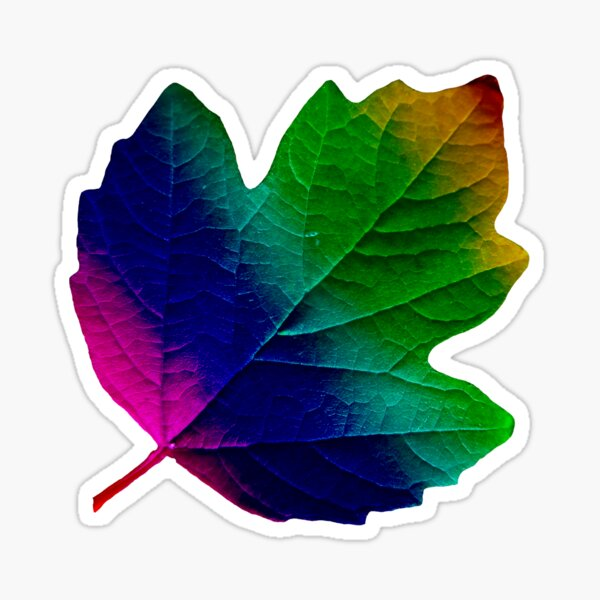 wundervolles, buntes Blatt, Herbst, Baum, Laub, Jahreszeit  Sticker