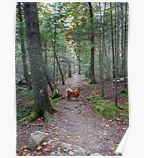 'On the Trail to Jordan Pond' Poster