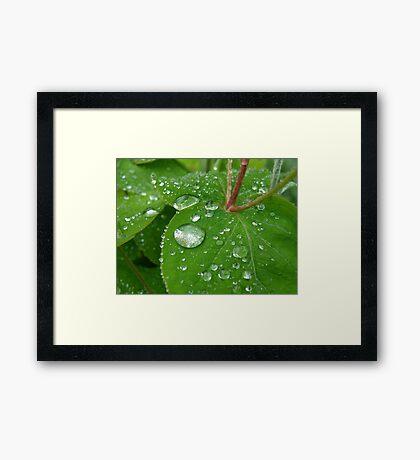 Rain on Hypericum Framed Print