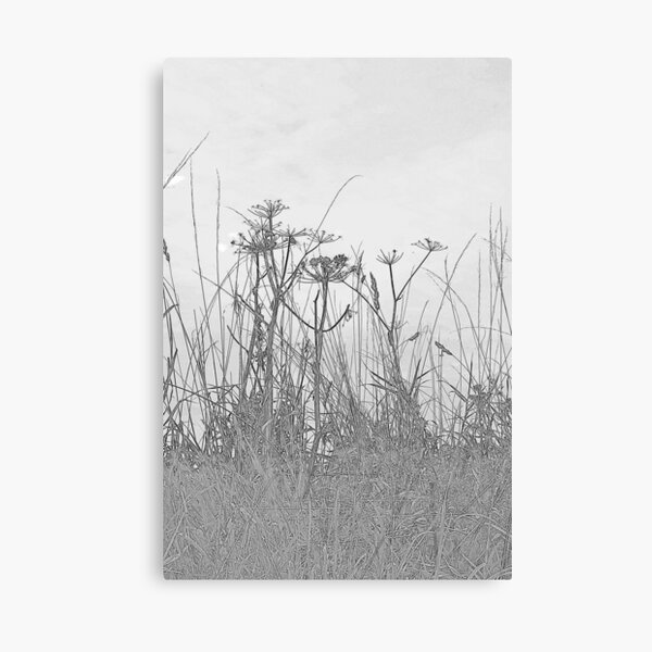 Monochrome grasses Canvas Print