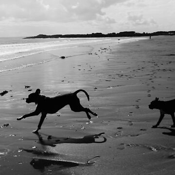 Beach Silhouettes by boxerportraits