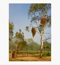 Pioneer Park ~ No 1 Photographic Print