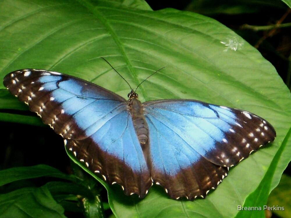 Blue Beauty by Breanna Kane