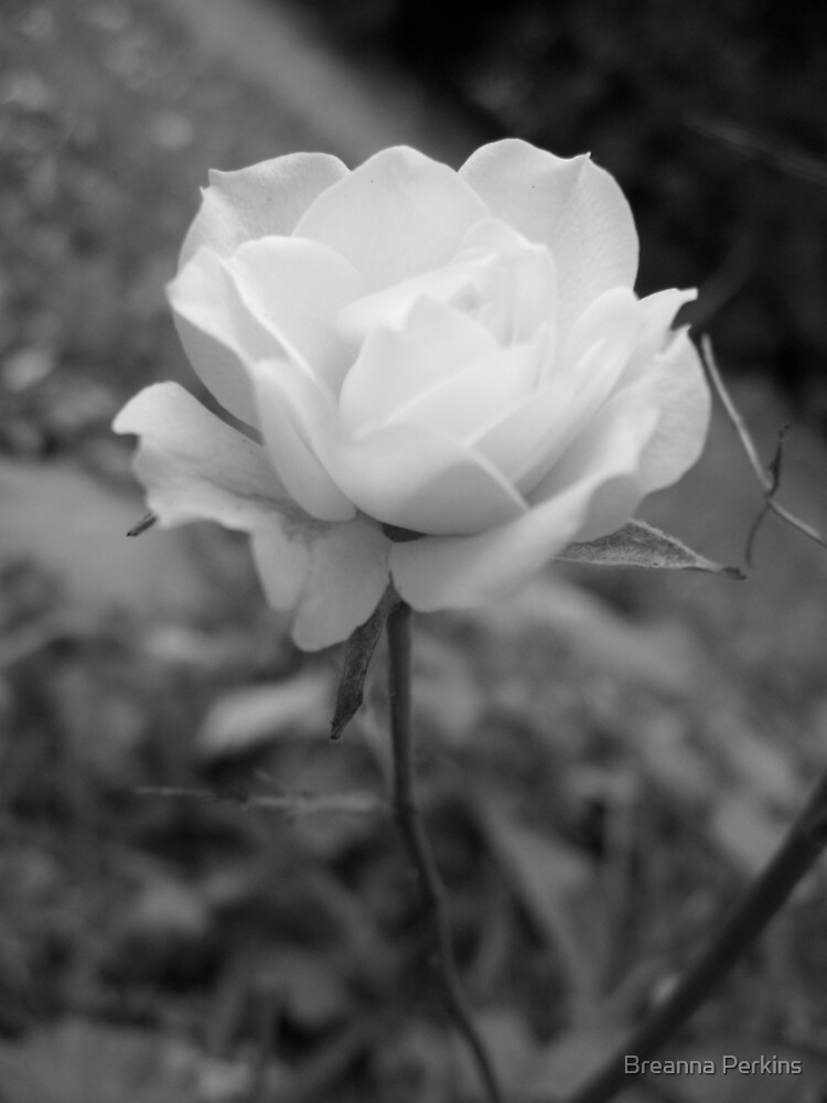 A Rose by any Other Name... by Breanna Kane