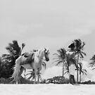 man and horse in the beach by momarch