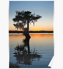 Louisiana Cypress Sunset Poster