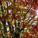 The Autumn Sun by digitaldavers