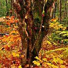 Woodland Study by Nancy Barrett