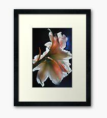 Amaryllis In The Light Framed Print