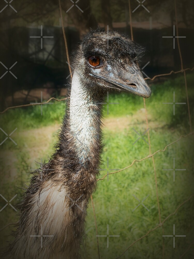 Evil-eyed Emu by Elaine Teague