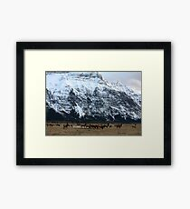 Elk Herd at Waterton Framed Print