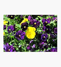 Purple And Yellow Flowers Photographic Print