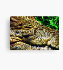 Crocodile Smile Canvas Print