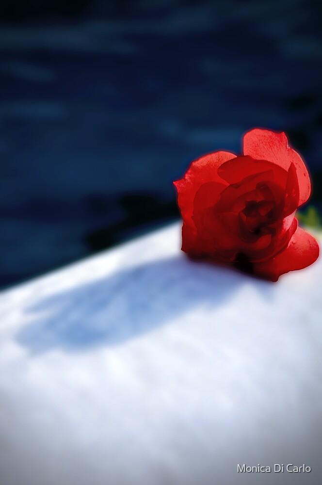 Rose by Monica Di Carlo