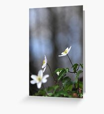 Forest anenomes Greeting Card