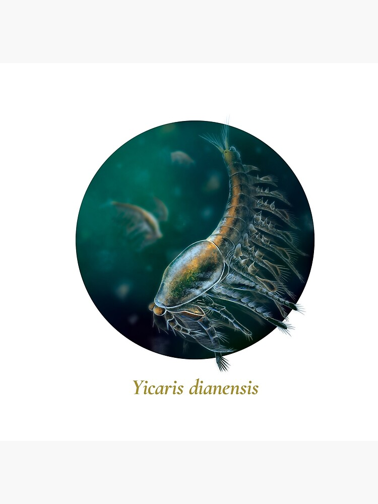 The Circles of Life: Yicaris dianensis by franzanth