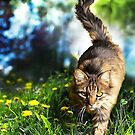 Tabby Cat Stalking by GraphicAlchemy