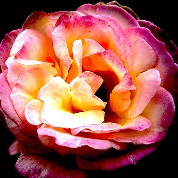 Mum's Roses1 by Randle