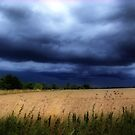 Storms A Brewing by RicheRifkind
