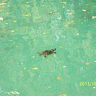 Una tartaruga nel Laghetto di Maria Luigia...Parma - Italy - 2000 visualizz.al 30 maggio 2015 -- featured rb explore 2 febbraio 2012 --- by Guendalyn
