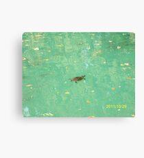Una tartaruga nel Laghetto di Maria Luigia...Parma - Italy - 2000 visualizz.al 30 maggio 2015 -- featured rb explore 2 febbraio 2012 --- Canvas Print