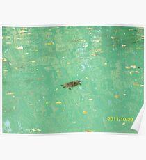 Una tartaruga nel Laghetto di Maria Luigia...Parma - Italy - 2000 visualizz.al 30 maggio 2015 -- featured rb explore 2 febbraio 2012 --- Poster