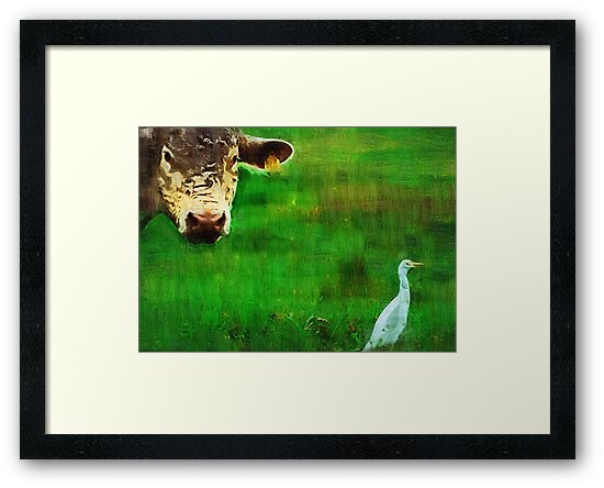 you gotta love a cow and his egret : Charolais Cattle  by Elizabeth Rodriguez