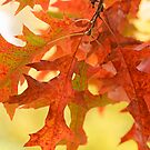 Autumn Leaves by Sarah-Jane Covey