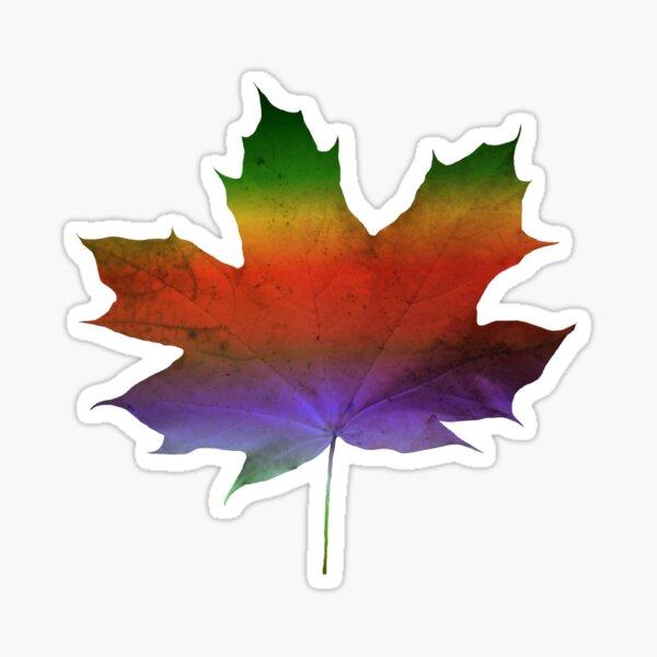wundervolles, buntes Ahorn - Blatt, Herbst, Baum, Jahreszeit, Regenbogen Sticker