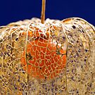 A Gilded Cage by Sarah-Jane Covey