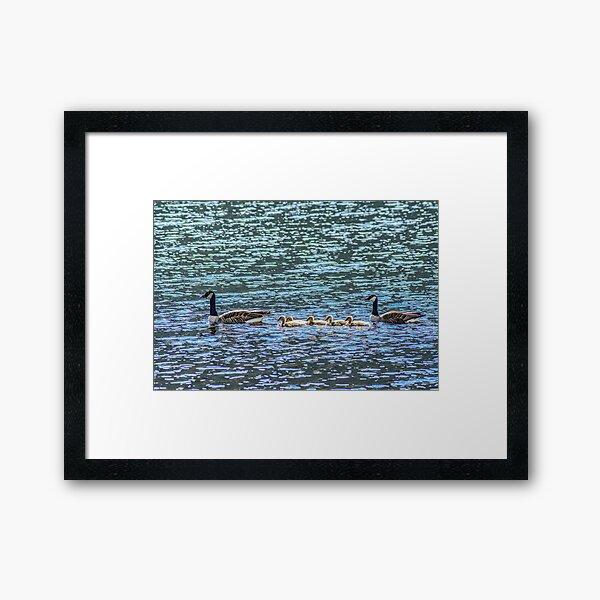Geese, Loch Awe, Scotland Framed Art Print