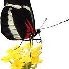 zauberhafter Schmetterling auf einer gelben Blume, Insekt, Natur von rhnaturestyles