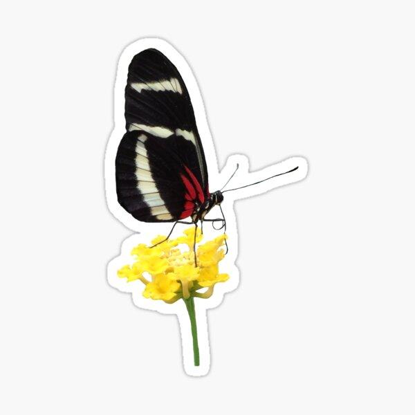 zauberhafter Schmetterling auf einer gelben Blume, Insekt, Natur Sticker