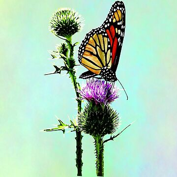 Monarch on Thistle by SudaP0408