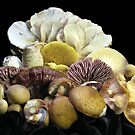 10 Edible Mushrooms From the Wild by Carla Wick/Jandelle Petters