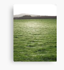 spiders web Canvas Print