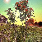 WILD FLOWERS by TatianaMichaela
