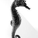 Sea Horse - black von Sandra Süsser