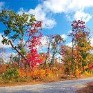Tennessee Backroads #1 by © Joe  Beasley IPA