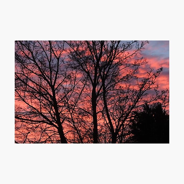 Winter dawn Photographic Print