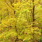 A Touch of Autumn Gold  by lorilee