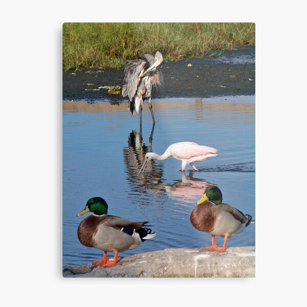 Frends at the beach Metal Print