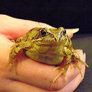 frog by darren  shaw