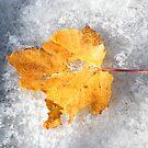 Autumn Leaf In Snow by raindancerwoman