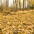 Leaves, Leaves and more Leaves! by Sean McConnery
