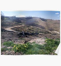After the 2009 Bushfires at Callignee, Victoria. Poster