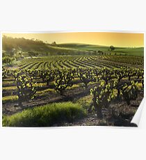 Barossa Valley Vineyards Poster