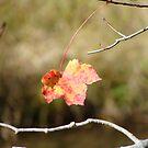 Lone Leaf by vigor