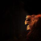 Lion King by Jack Toohey